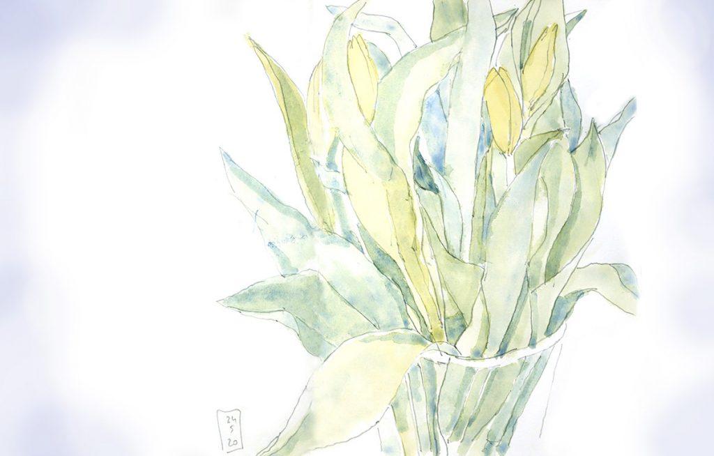 Tulpen im Frühling [Aquarell]